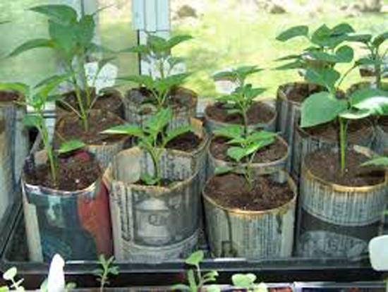 Come organizzare gli spazi in un orto sul balcone