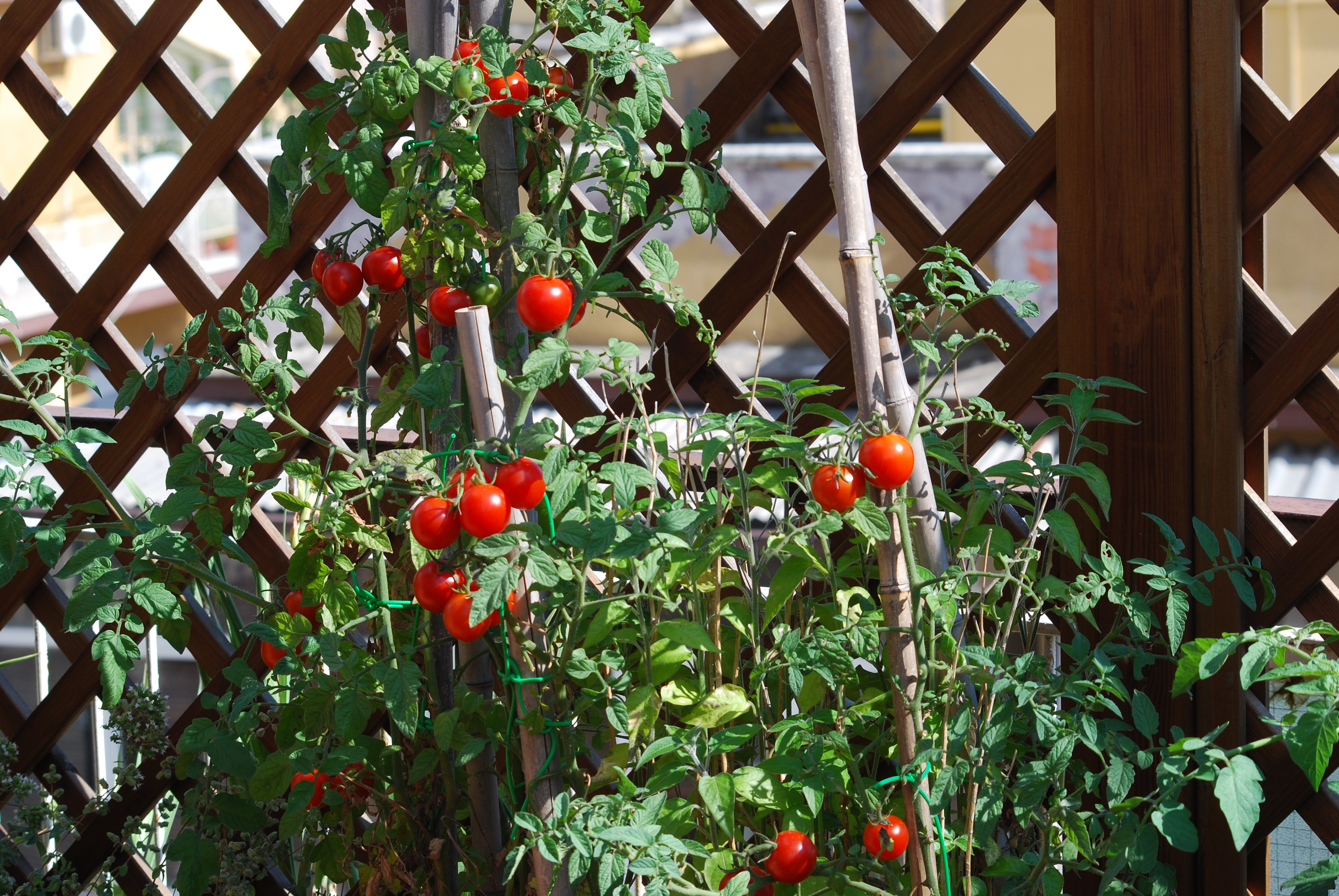L\'orto sul balcone | Verde-natura
